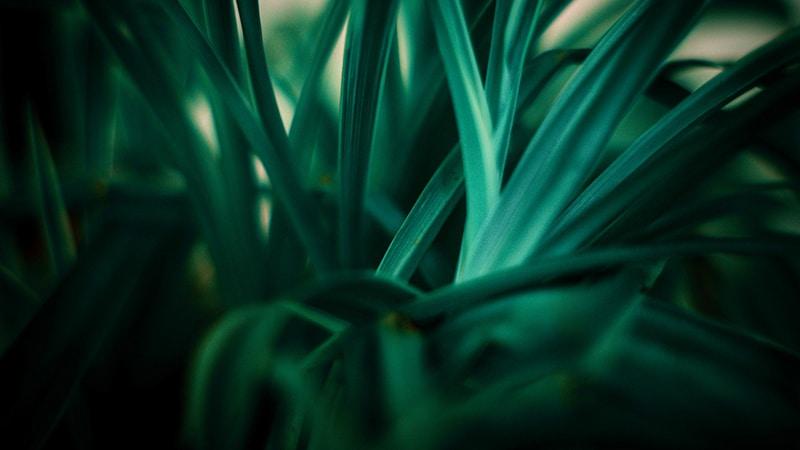 plante verte écologie