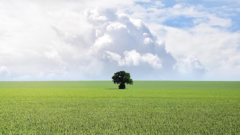 arbre-seul